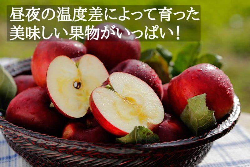 昼夜の温度差によって育った 美味しい果物がいっぱい!